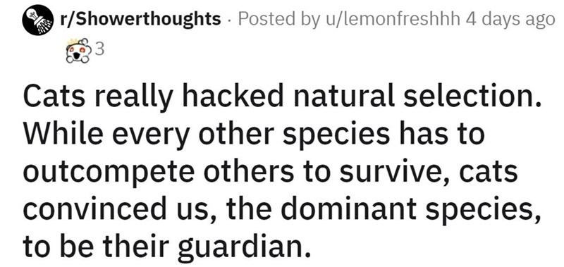 Text - r/Showerthoughts Posted by u/lemonfreshhh 4 days ago Cats really hacked natural selection. While every other species has to outcompete others to survive, cats convinced us, the dominant species, to be their guardian.