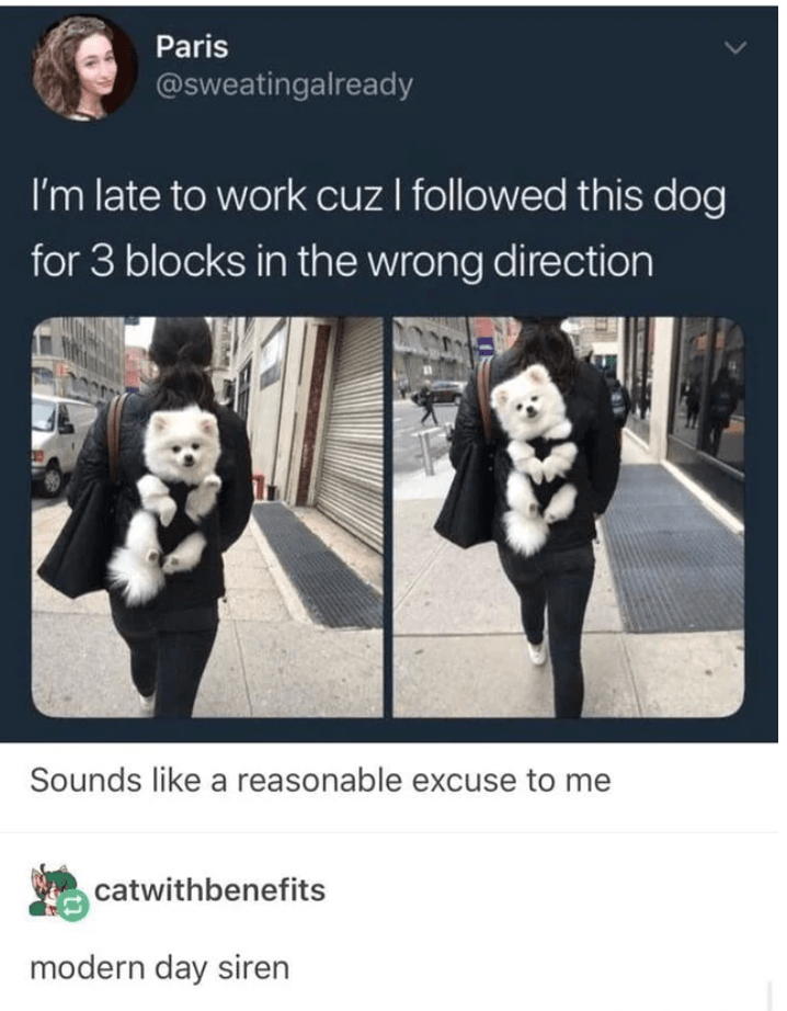 Text - Paris @sweatingalready I'm late to work cuz I followed this dog for 3 blocks in the wrong direction Sounds like a reasonable excuse to me catwithbenefits modern day siren