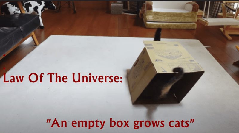 """lolcats - Wood - Law Of The Universe: """"An empty box grows cats"""""""