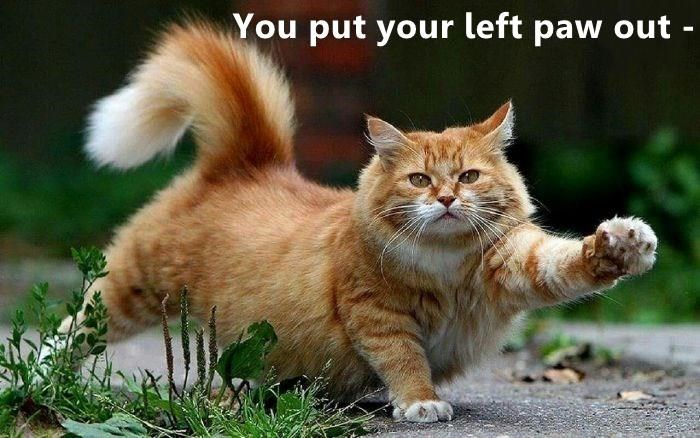 lolcats - Cat - You put your left paw out -