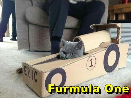 lolcats - Cat - (1) ERIC Furmula One