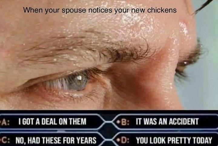 Face - When your spouse notices your new chickens -A: I GOT A DEAL ON THEM B: IT WAS AN ACCIDENT C: NO, HAD THESE FOR YEARS D: YOU LOOK PRETTY TODAY 1.