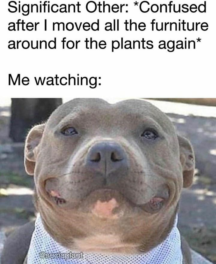 Dog - Significant Other: *Confused after I moved all the furniture around for the plants again* Me watching: @sociaplant