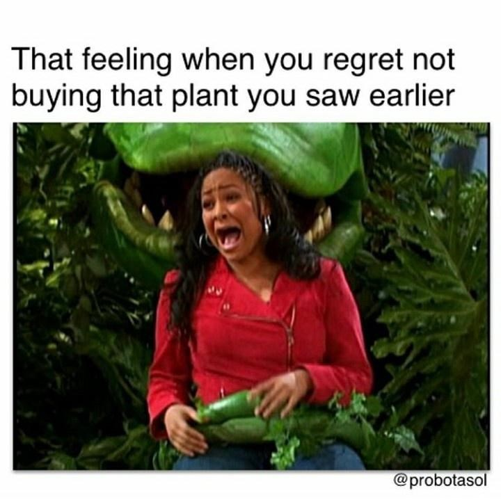 Adaptation - That feeling when you regret not buying that plant you saw earlier @probotasol