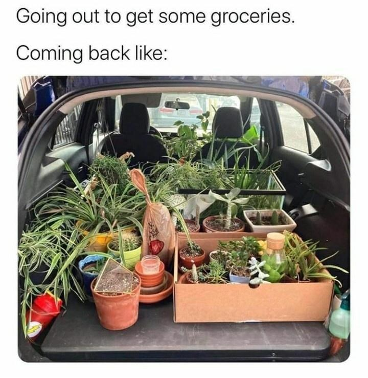 Houseplant - Going out to get some groceries. Coming back like: