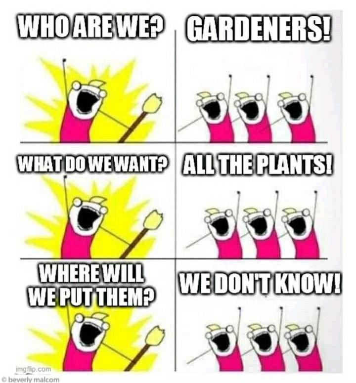 Pink - WHO ARE WE? GARDENERS! WHAT DO WE WANTP ALL THE PLANTS! WHERE WILL WE PUT THEM? WE DON'T KNOW! dock imgflip.com O beverly malcom