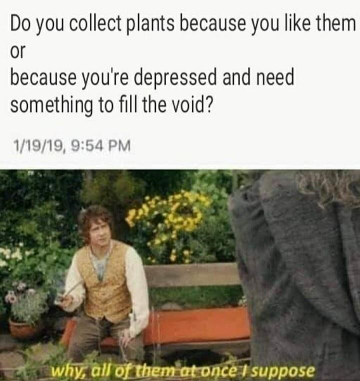 Text - Do you collect plants because you like them or because you're depressed and need something to fill the void? 1/19/19, 9:54 PM why, all of them at once I suppose