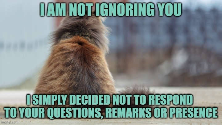 lolcats - Photo caption - OAM NOTIGNORING YOU ISIMPLY DECIDED NOT TO RESPOND TO YOUR QUESTIONS, REMARKS OR PRESENCE imgflip.com