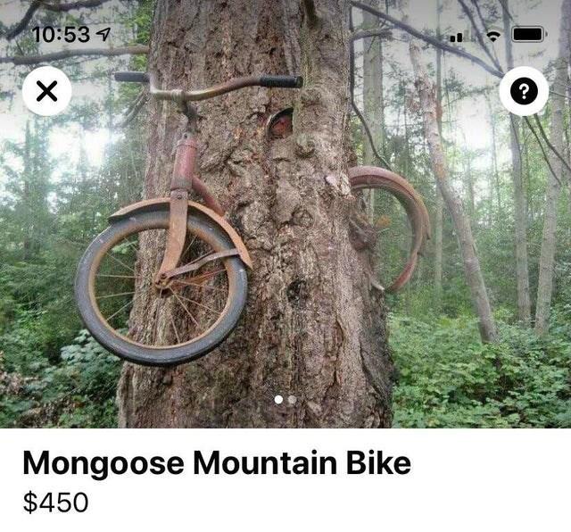 Tree - 10:53 7 ? Mongoose Mountain Bike $450