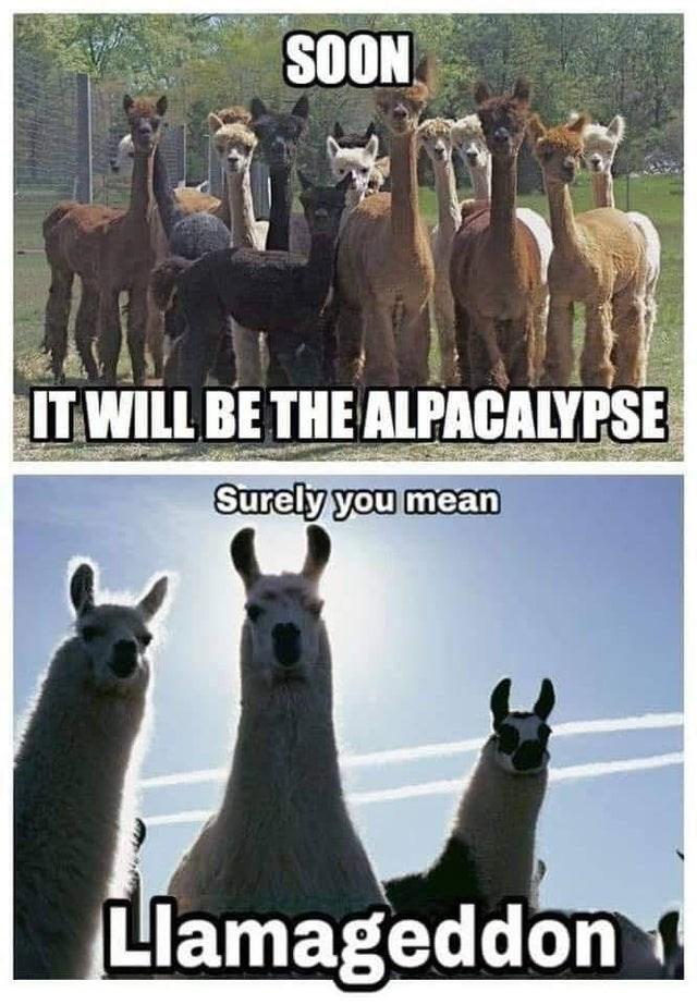 Llama - SOON IT WILL BE THE ALPACALYPSE Surely you mean Llamageddon