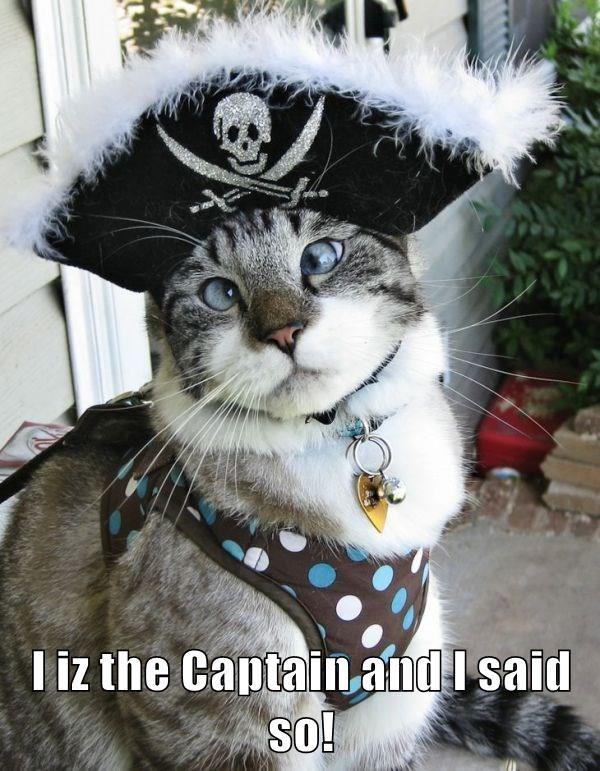 lolcats - Cat - T iz the Captain and I said SO!
