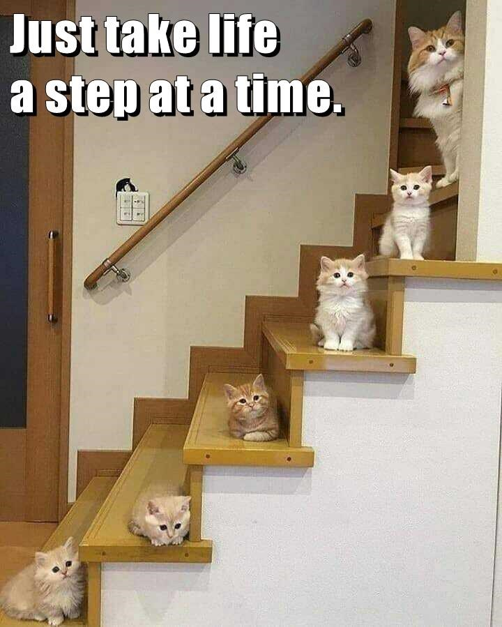 lolcats - Shelf - Just take life a step at a time.