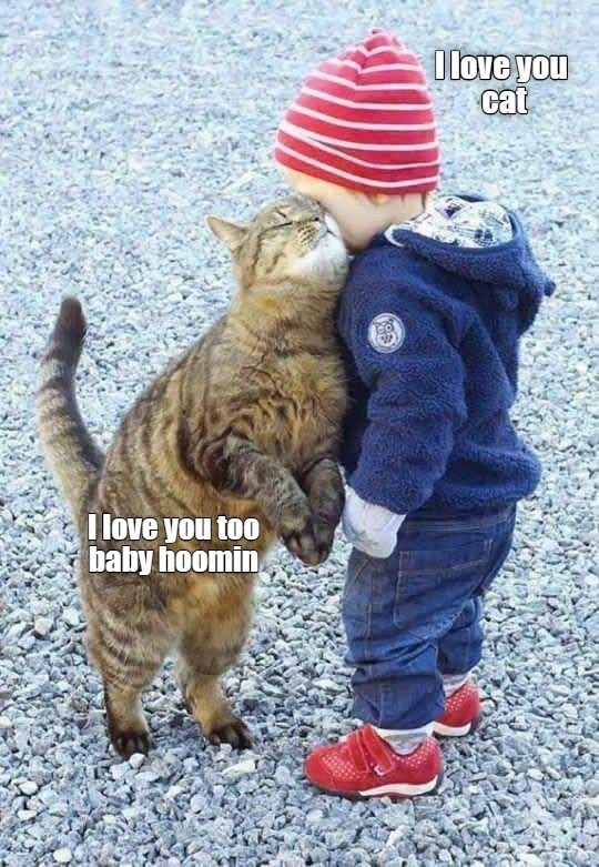 lolcats - Cat - Olove you cat I love you too baby hoomin