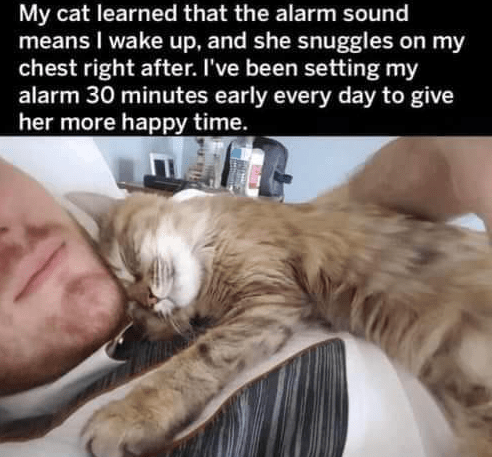My cat learned that the alarm sound means I wake up, and she snuggles on my chest right after. I've been setting my alarm 30 minutes early every day to give her more happy time.