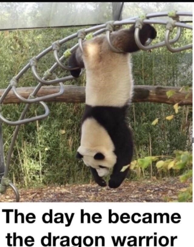 The day he became the dragon warrior funny panda bear hanging upside down as if its performing a kung fu move