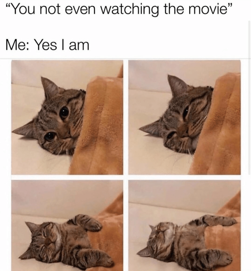 You not even watching the movie Me: Yes I am four panels of a cat under a blanket falling asleep