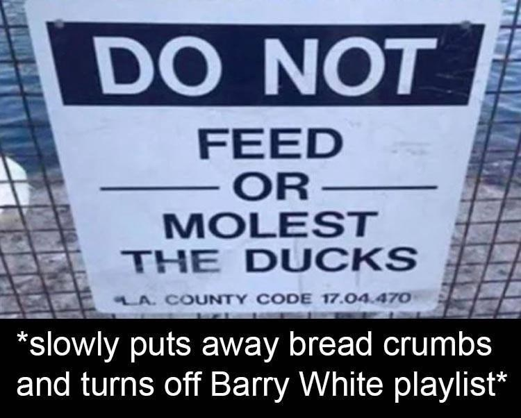 Font - DO NOT FEED OR MOLEST THE DUCKS LA. COUNTY CODE 17.04.470 *slowly puts away bread crumbs and turns off Barry White playlist*