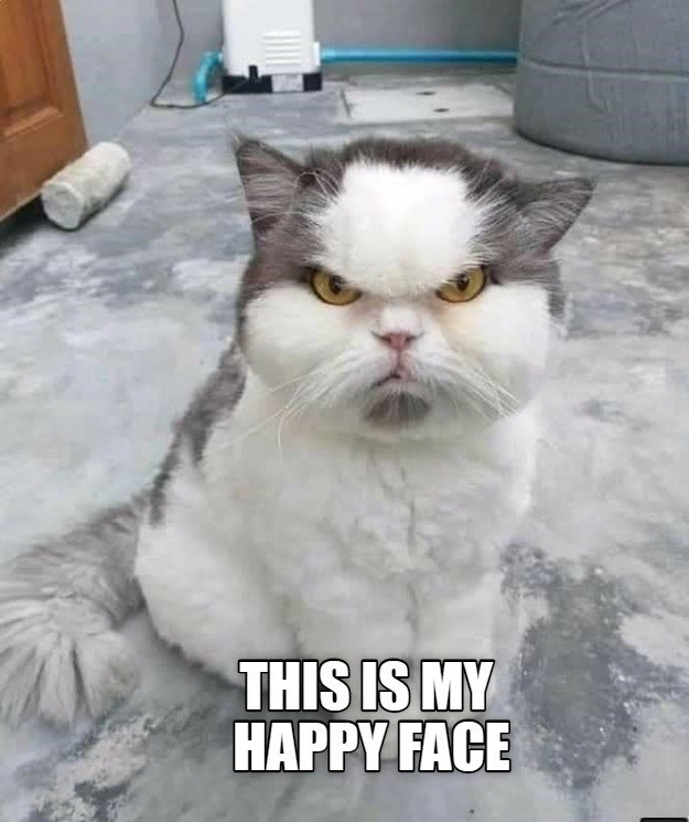 lolcats - Cat - THIS IS MY HAPPY FACE