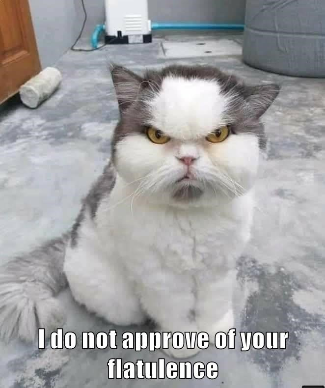 lolcats - Cat - Ido not approve of your flatulence