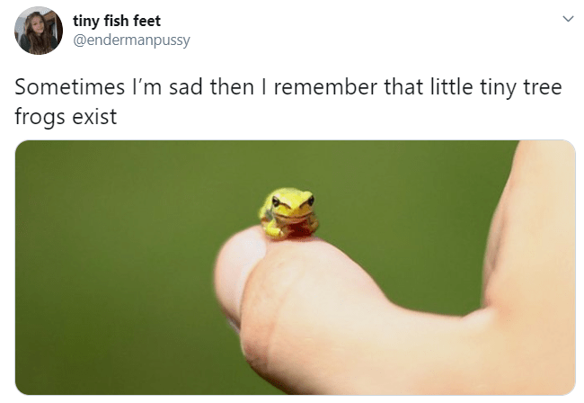 Joint - tiny fish feet @endermanpussy Sometimes l'm sad then I remember that little tiny tree frogs exist