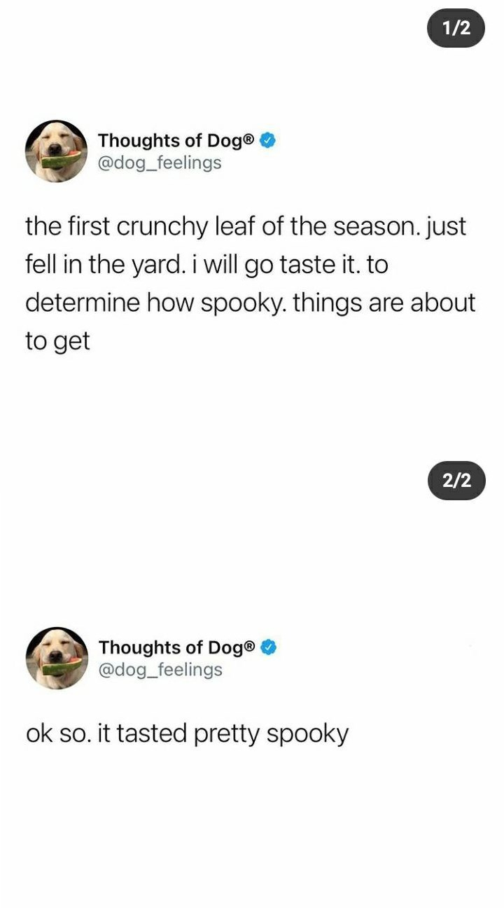 Thoughts of Dog@ @dog_feelings the first crunchy leaf of the season. just fell in the yard. i will go taste it. to determine how spooky. things are about to get