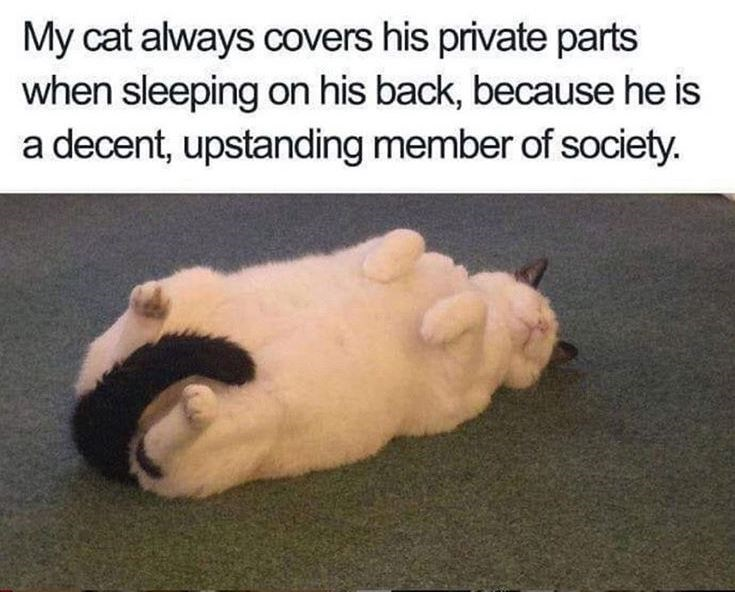 My cat always covers his private parts when sleeping on his back, because he is a decent, upstanding member of society. chonky chubby cat lying on its back with tail tucked between its legs