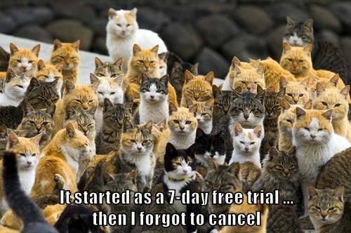 it started as a 7 day free trial then I forgot to cancel multiple cats staring angrily in the same direction