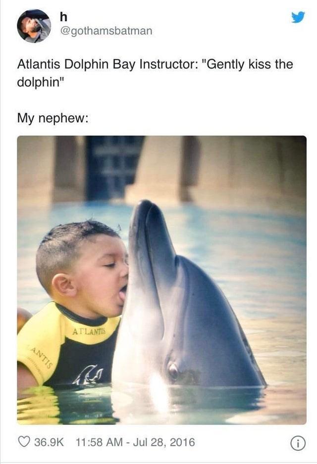 "Adaptation - h @gothamsbatman Atlantis Dolphin Bay Instructor: ""Gently kiss the dolphin"" My nephew: ATLANTIS ANTIS i 36.9K 11:58 AM - Jul 28, 2016"