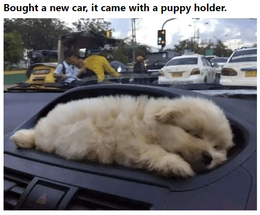 Dog - Bought a new car, it came with a puppy holder.