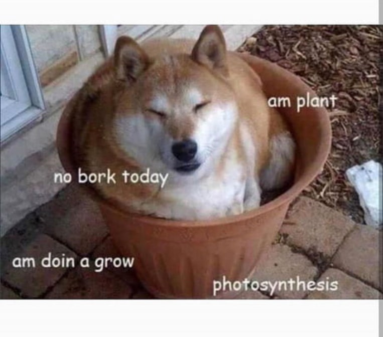 Mammal - am plant bork today no am doin a grow photosynthesis