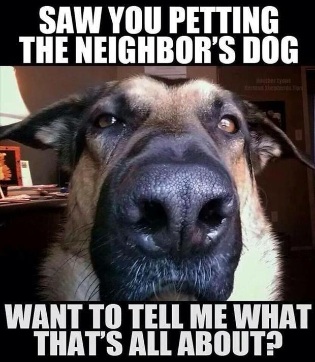 Facial expression - SAW YOU PETTING THE NEIGHBOR'S DOG DOok Berman shepteres lip WANT TO TELL ME WHAT THAT'S ALL ABOUT?