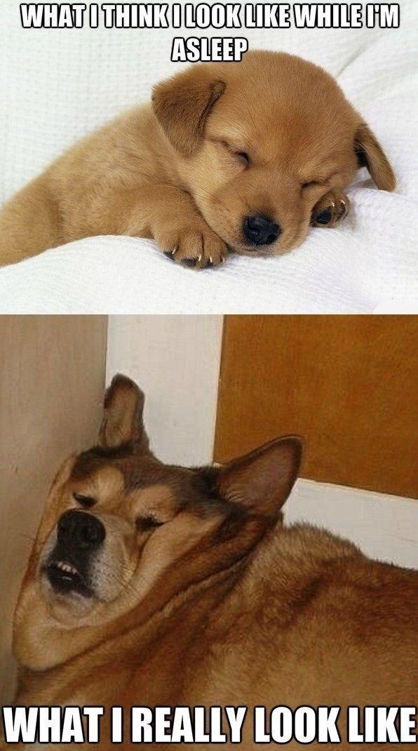 Dog - WHATITHINKOLOOK LIKE WHILE M ASLEEP WHAT I REALLY LOOK LIKE