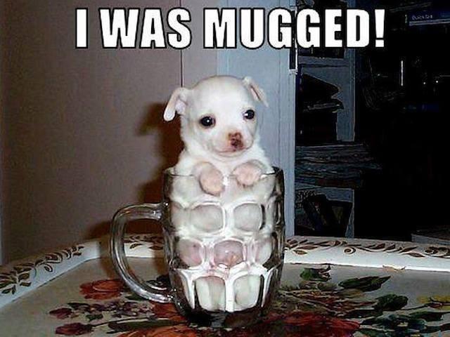 Dog - I WAS MUGGED!