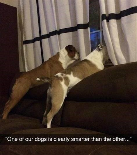 """Dog - """"One of our dogs is clearly smarter than the other..."""""""