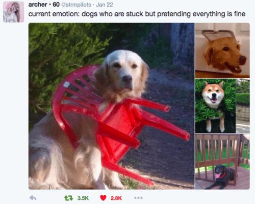 Dog - archer · 60 estrmpilots · Jan 22 current emotion: dogs who are stuck but pretending everything is fine 17 3.5K 2.8K ...