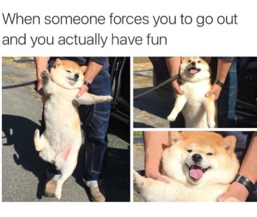 Dog - When someone forces you to go out and you actually have fun