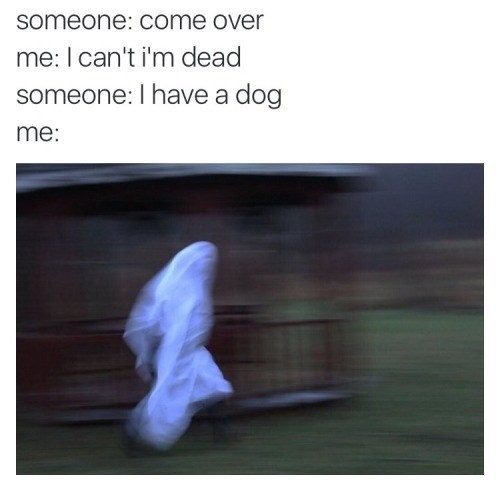 Text - someone: come over me: I can't i'm dead someone: I have a dog me: