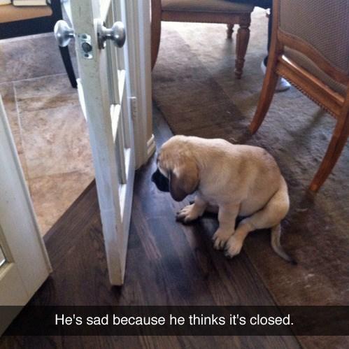 Dog - He's sad because he thinks it's closed.