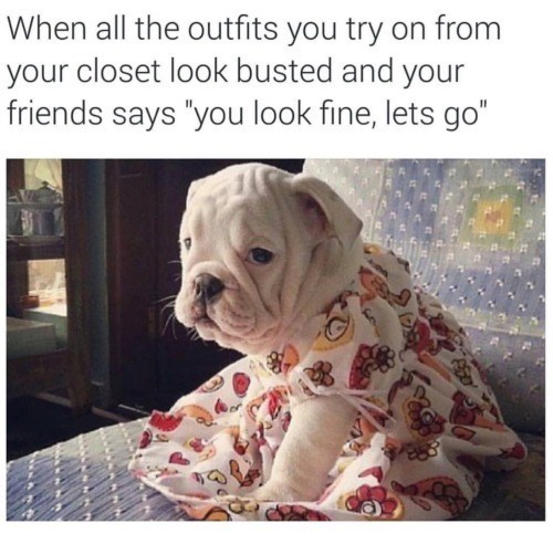 """Dog - When all the outfits you try on from your closet look busted and your friends says """"you look fine, lets go"""""""