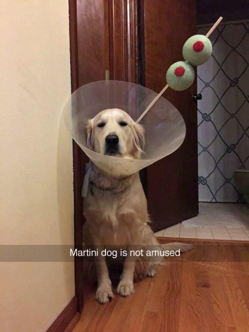 Dog - Martini dog is not amused
