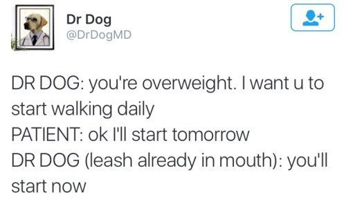 Text - Dr Dog @DrDogMD DR DOG: you're overweight. I want u to start walking daily PATIENT: ok l'll start tomorrow DR DOG (leash already in mouth): you'll start now