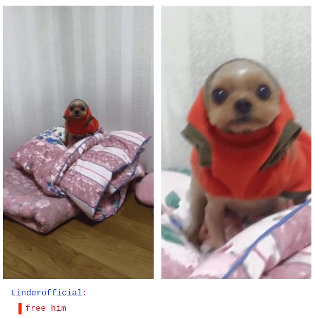 Dog - tinderofficial: free him