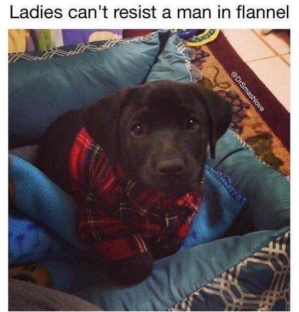 Dog - Ladies can't resist a man in flannel @DrSmashlove