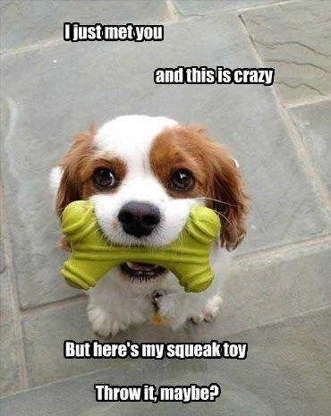 Dog - Ojust met you and this is crazy But here's my squeak toy Throw it, maybe?
