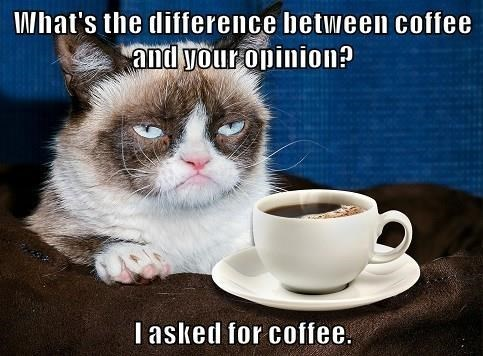 Cat - What's the difference between coffee and your opinion? Iasked for coffee.