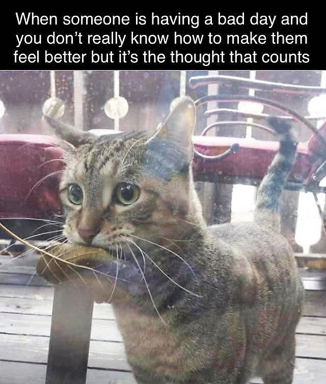 Cat - When someone is having a bad day and you don't really know how to make them feel better but it's the thought that counts