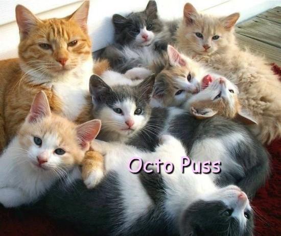 Cat - Octo Puss