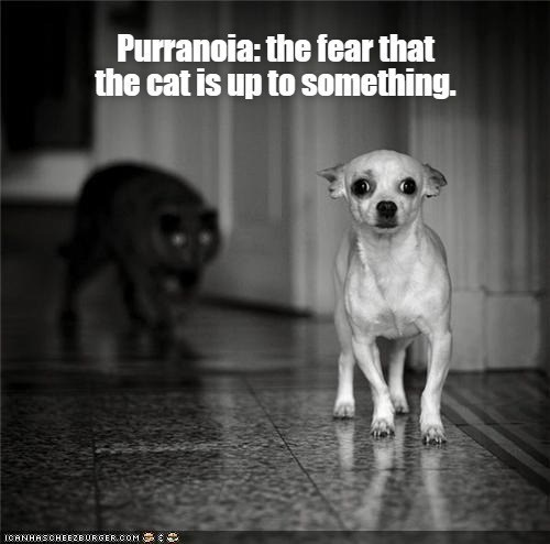 Dog breed - Purranoia: the fear that the cat is up to something. ICANHASCHEEZE URGER.COM