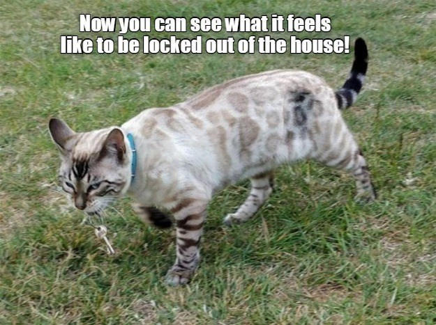 Cat - Now you can see what it feels like to be locked out of the house!