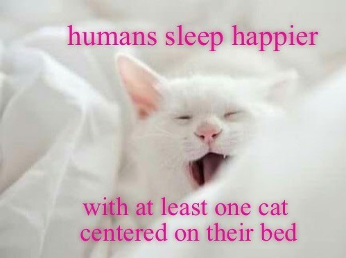 Cat - humans sleep happier with at least one cat centered on their bed
